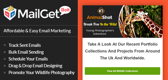 Email Marketing Service For Wildlife Photography & Animal Snapshots